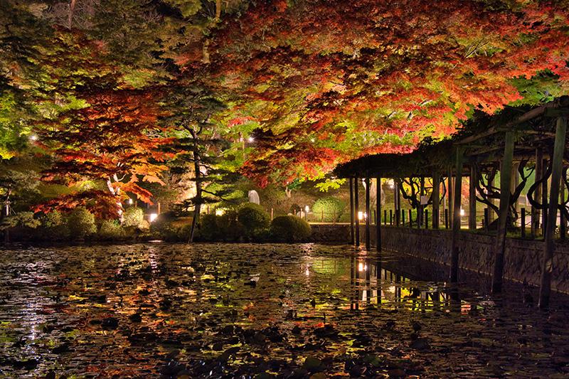 霞ヶ池の紅葉