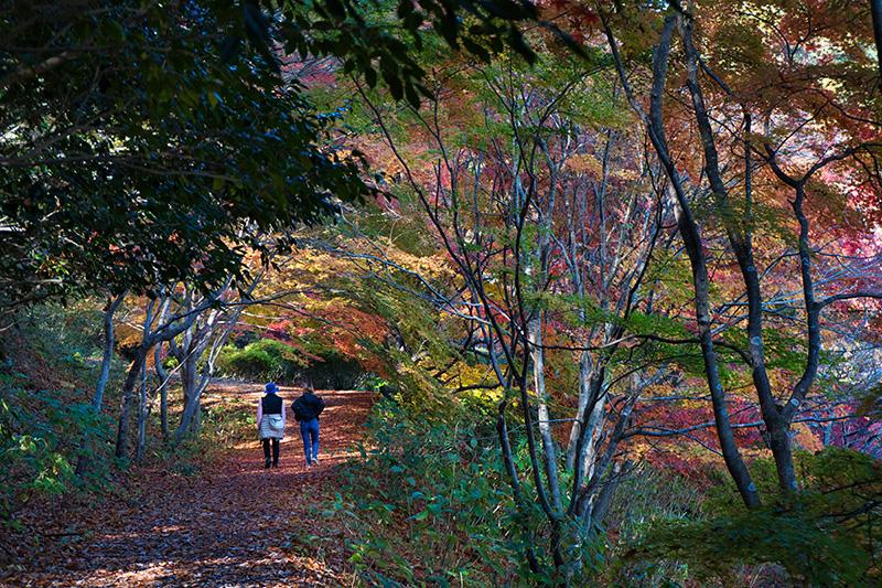 紅葉の道を歩く