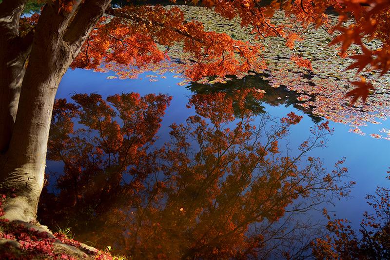 池の中の空