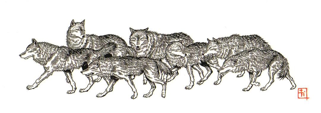 丹波山村の狼