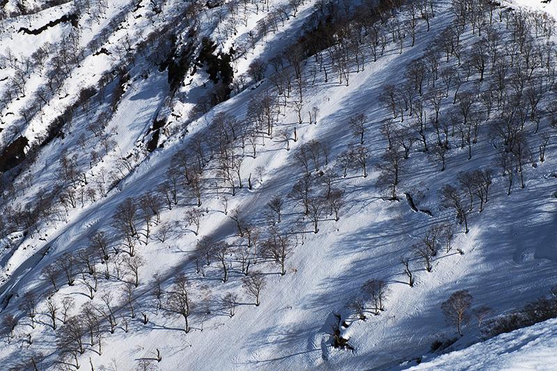 雪面に木々