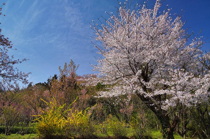 花咲く山道