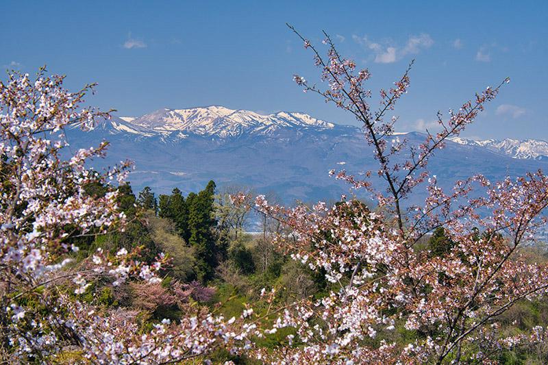 花見山から吾妻連峰