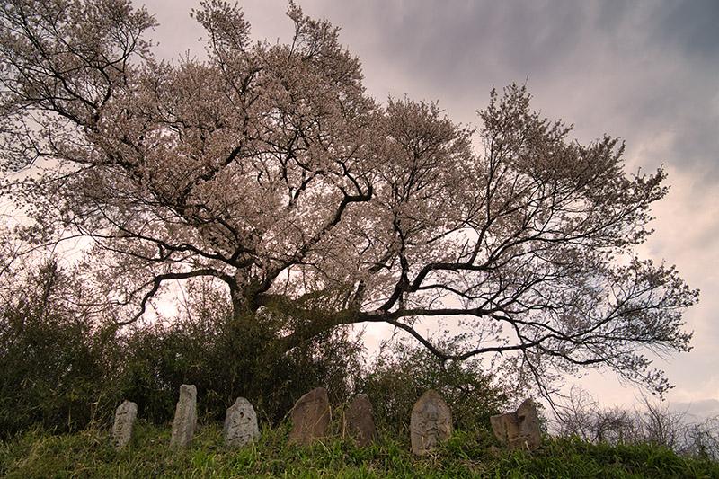 桜と道祖神