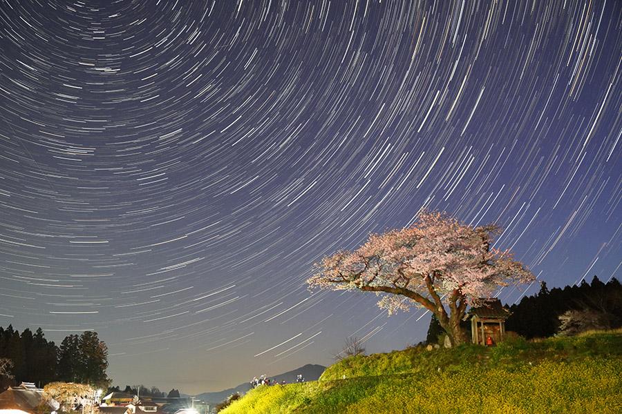 桜とスタートレイル