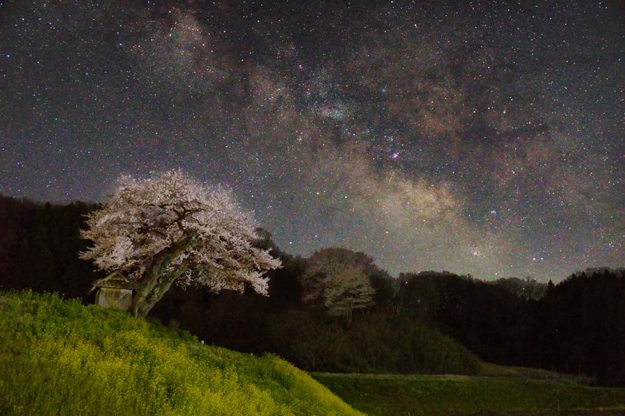 桜と天の川アップ
