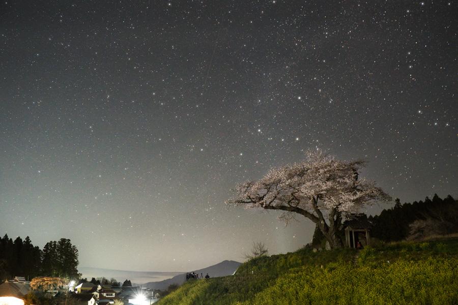 小沢の桜とカシオペア