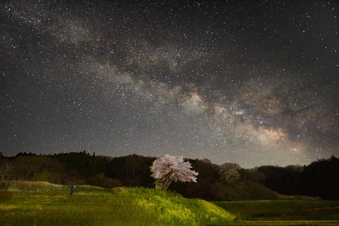 小沢の桜と天の川