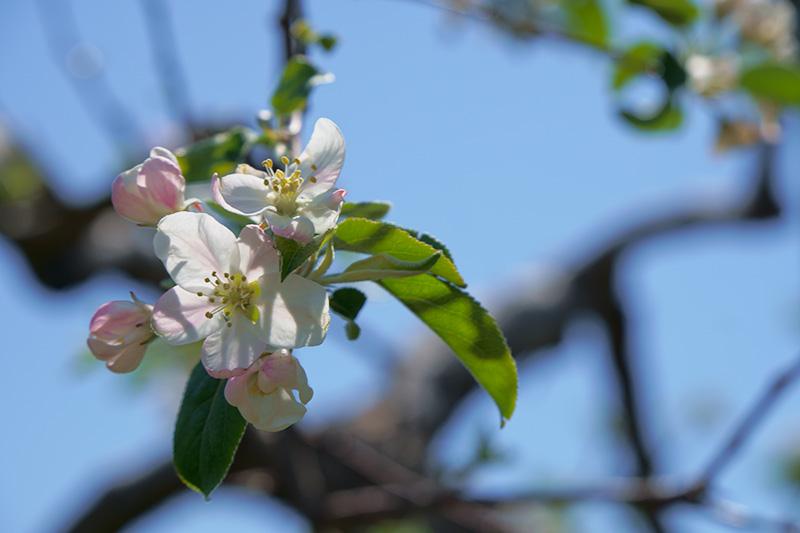 りんご畑deコンサート