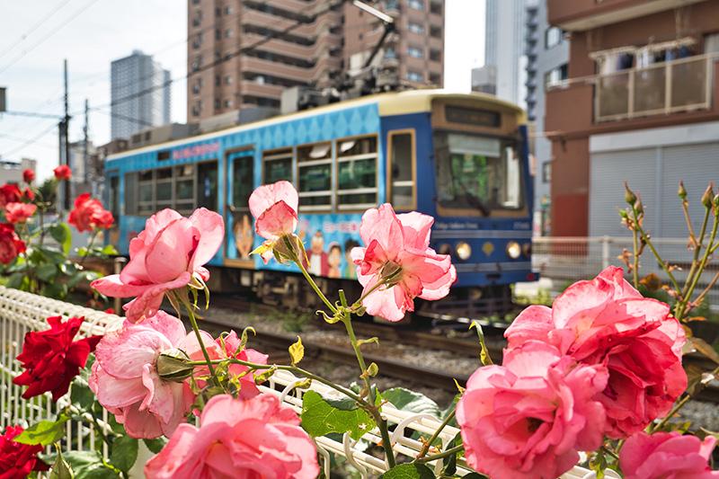 バラと路面電車