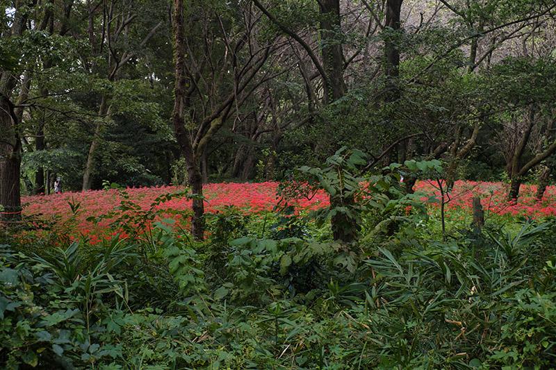 野川公園・自然観察園で