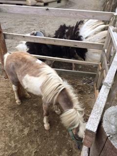 f:id:suntopia-farm:20150625011945j:plain