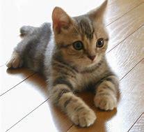 猫①.jpg