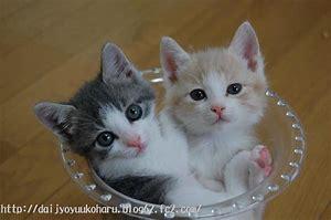 猫②.jpg