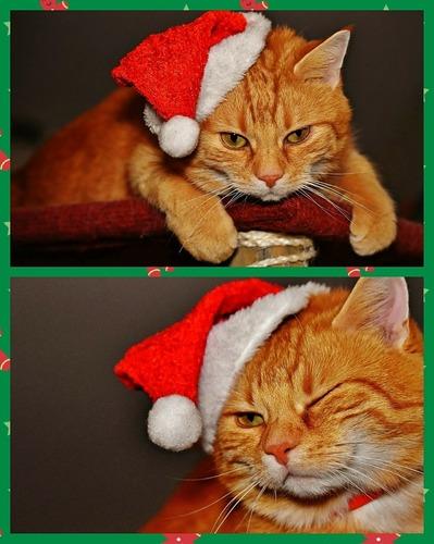サンタ猫.jpg