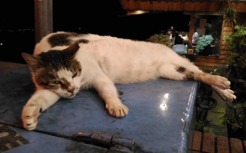 九份老街の猫