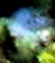 f:id:superlanza230:20160720122941j:plain