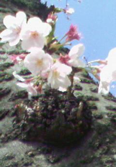 f:id:supiritasu:20100412110136j:image