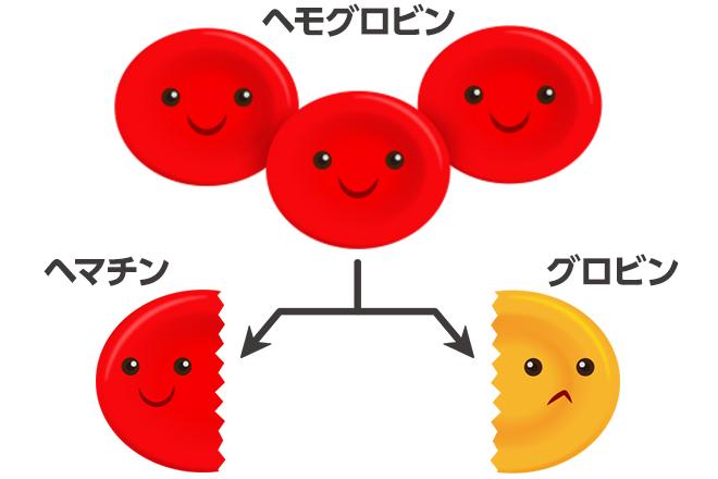 ヘモグロビン ヘマチン グロビン