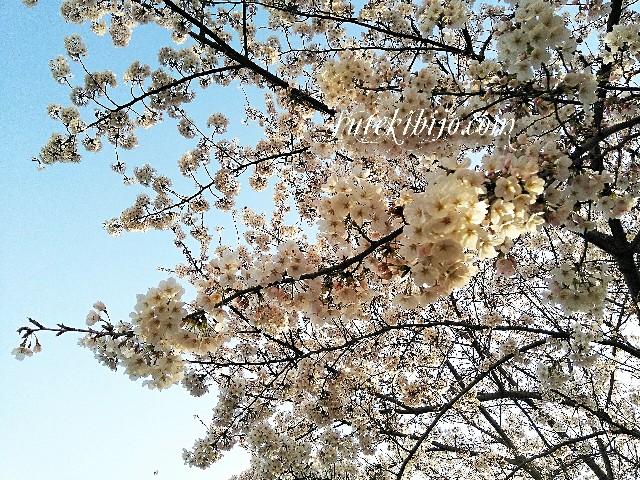 f:id:surusumi1211:20190406151844j:image