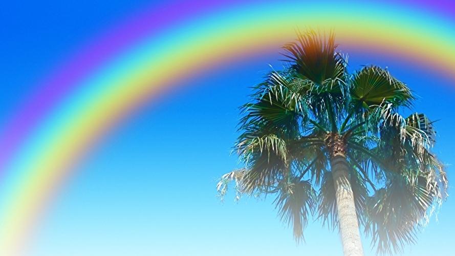 LGBTのシンボル レインボーとカリフォルニアのヤシの木