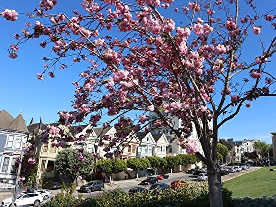 カリフォルニア(サンフランシスコ)の常春な気候