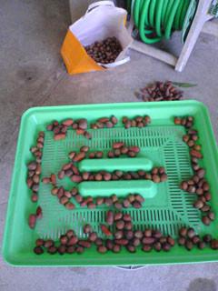 f:id:sutara_lumpur:20081220115422j:image