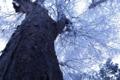 熊野神社の林