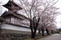 [須坂の桜]普願寺境内の桜