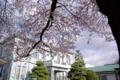 [須坂の桜]旧上高井郡役所の桜