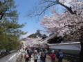 [須坂の桜]普願寺参道の桜並木