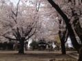 [須坂の桜]須坂西宮神社の桜