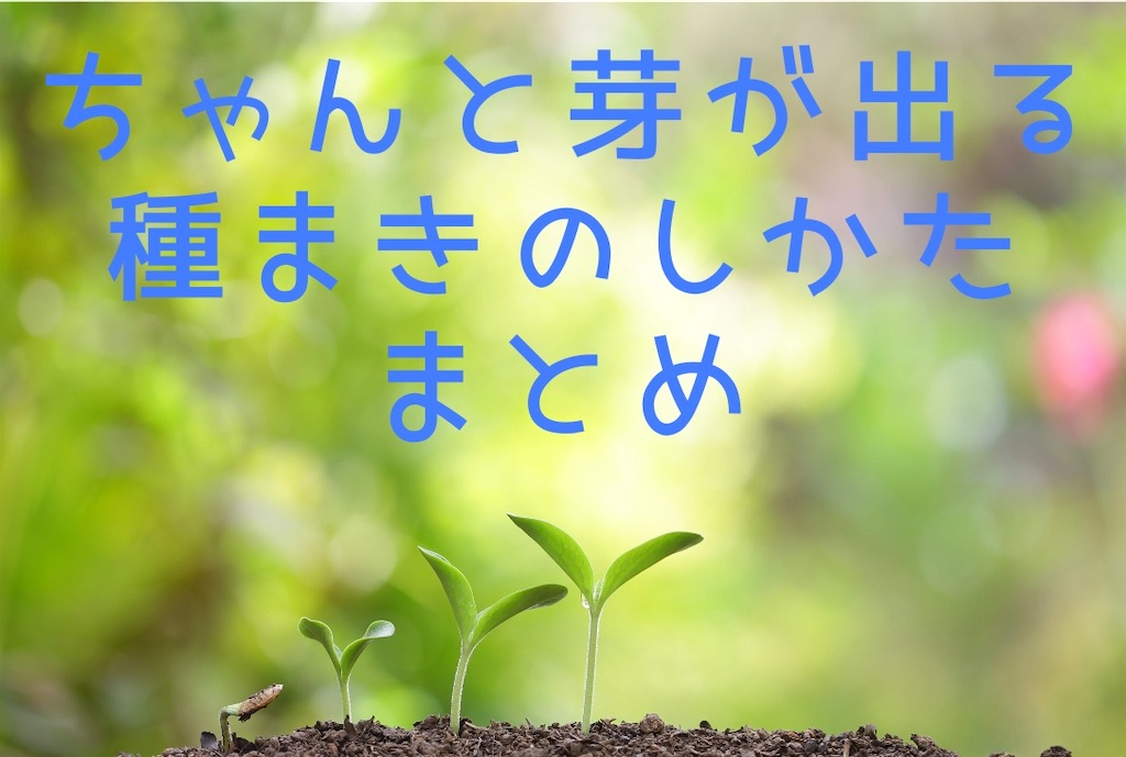 f:id:suzu-amayadori:20200625002142j:image