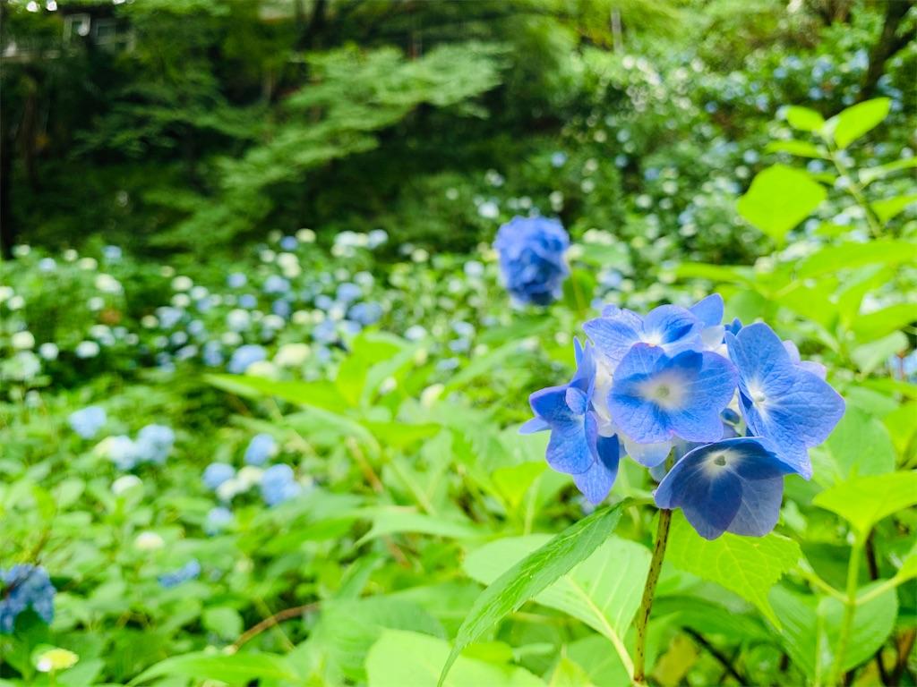 f:id:suzu-amayadori:20200826105002j:image