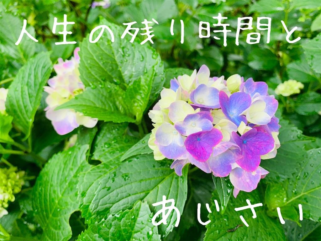 f:id:suzu-amayadori:20200826110919j:image