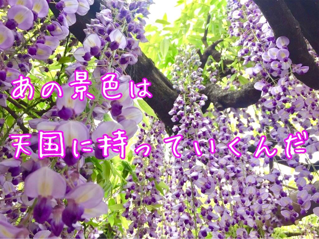f:id:suzu-amayadori:20200826121344j:image