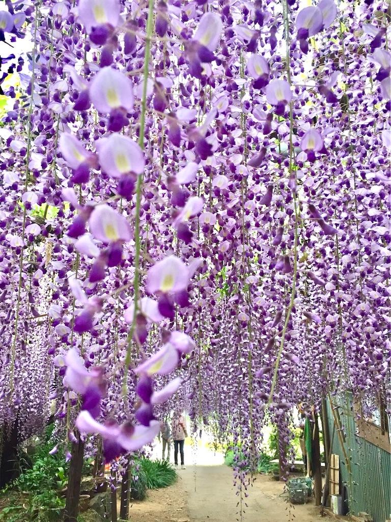 f:id:suzu-amayadori:20200826121649j:image