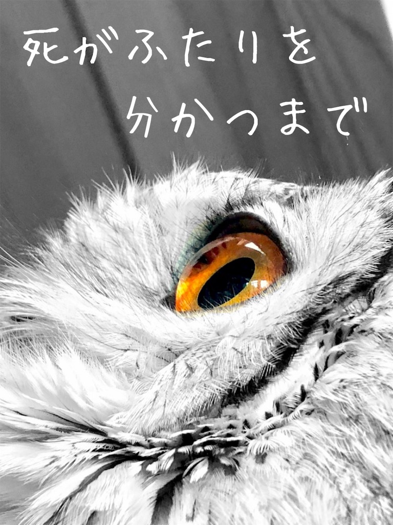 f:id:suzu-amayadori:20200826124332j:image