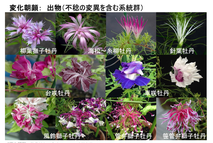 f:id:suzuike1954:20200722232505p:plain