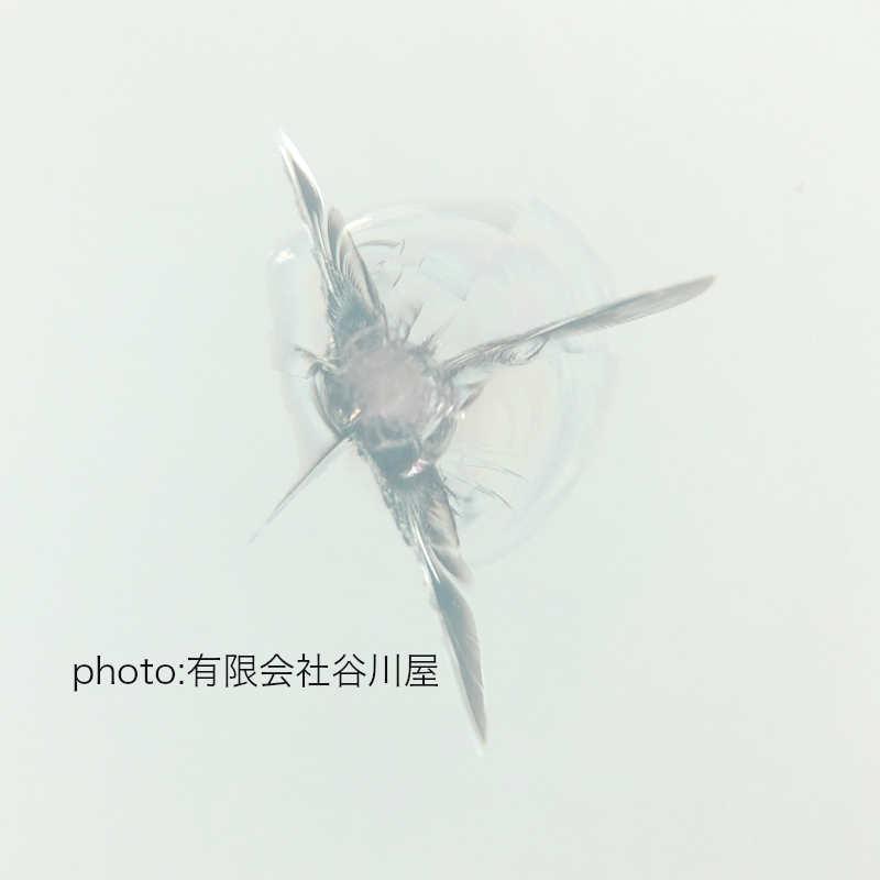 f:id:suzuka-mieken:20191227063836j:plain