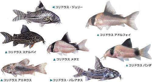 f:id:suzuki-goose350:20210922000555j:image