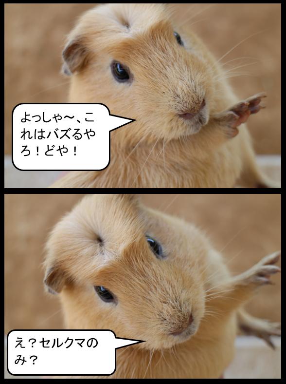 f:id:suzukidesu23:20140727212927p:plain