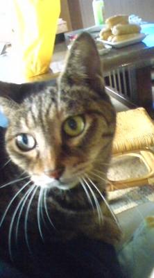 f:id:suzukishika:20080816172350j:image