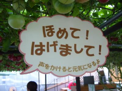f:id:suzukishika:20090823214458j:image