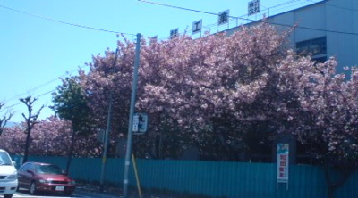 f:id:suzukishika:20100523225102j:image