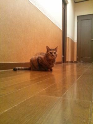 f:id:suzukishika:20130531111952j:image