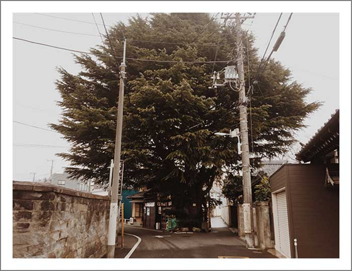 f:id:suzukiyuta3104:20180406113553j:plain