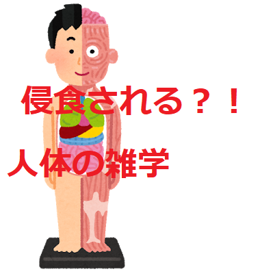 f:id:suzukizozo:20181103145923p:plain