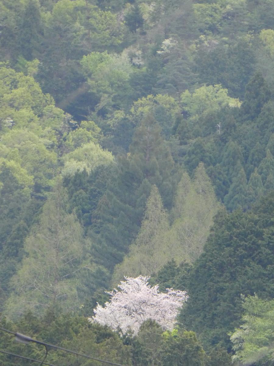 f:id:suzukokage:20190424130308j:plain