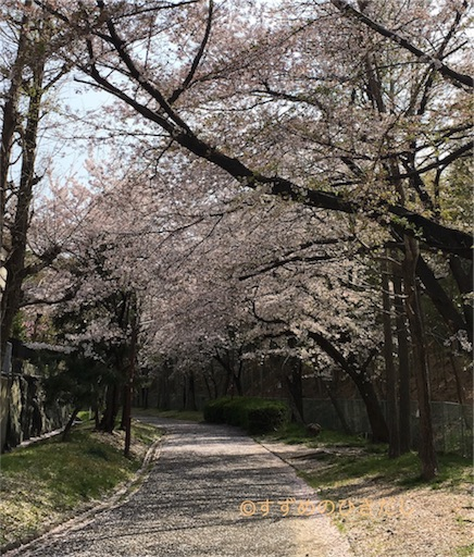 f:id:suzume-hikidashi:20180509075311j:image